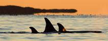 home_whale